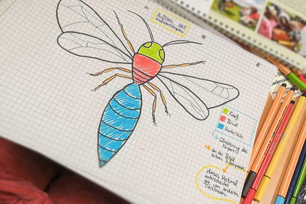 Der Aufbau eines Insektenkörpers