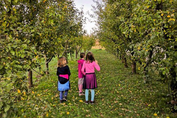 Auf der Suche nach schönen Äpfeln