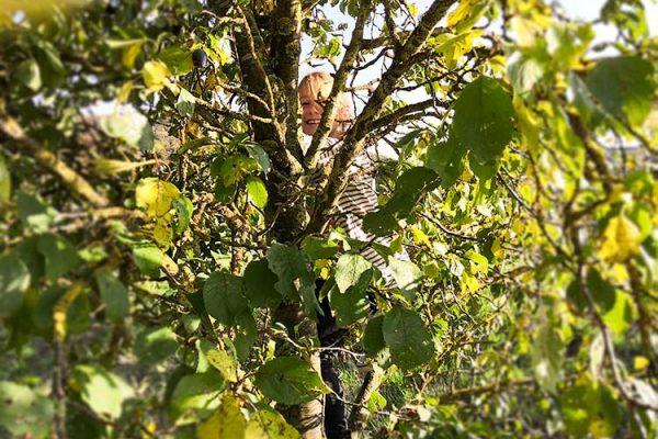 Kletterspaß beim Apfelpflücken